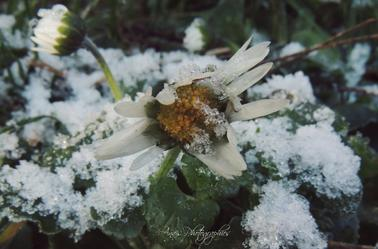 « Le bonheur est comme la neige : il est doux, il est pur et... il fond. »
