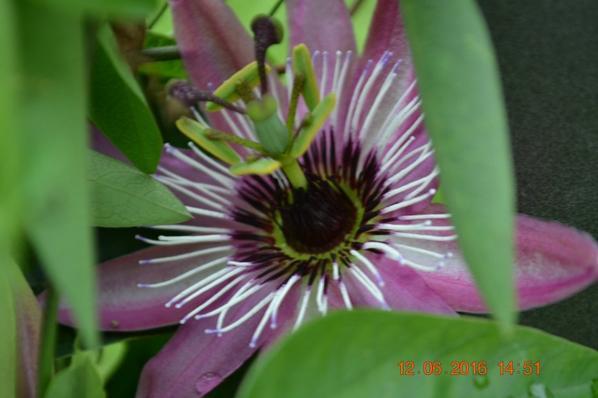 """l'une de mes passions """"les fleurs"""""""