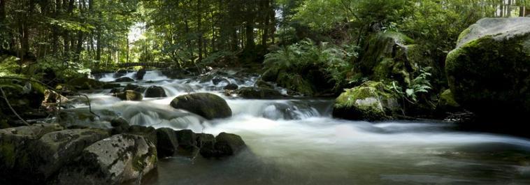 Beauté et Nature
