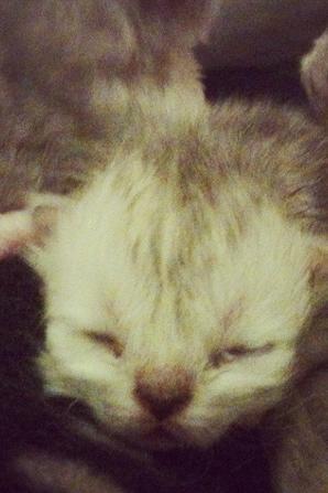 Les Kool Kitty 6