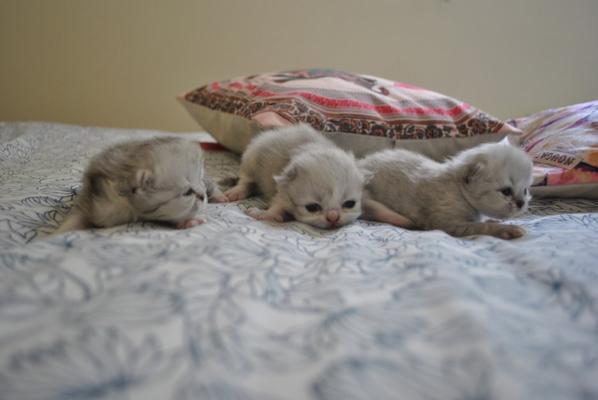 Les Kool Kitty 6 à 12 jours