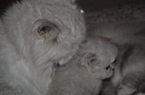 Presqu'un mois pour les Kool Kitty 6