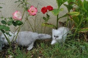 Un après midi dans le jardin