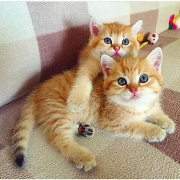 bonjour les chats de witold