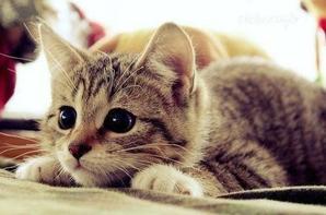 "ah chats alors """