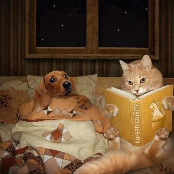 """""""""""chats alors ahah c'est samedi entre la sieste"""
