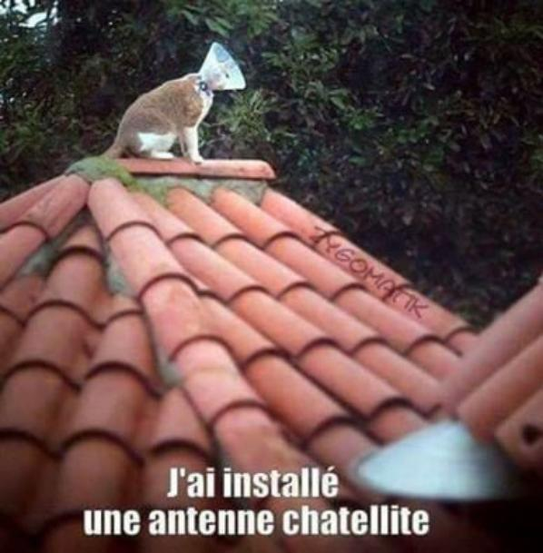 mais chats alors ''