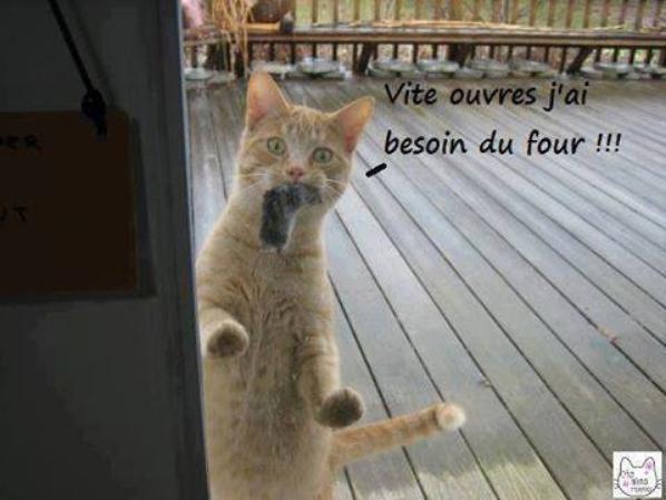 "ah ben ""chat alors """" chez totol"