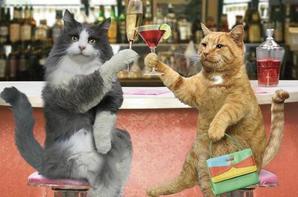 "ah chat alors """