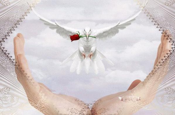 Vole colombe vers mes amis et apporte leur tous mes bons voeux...