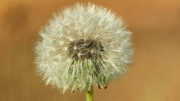 France 3 Bourgogne Page aimée · 23 h ·    Attention aux #pollens de graminées : les risques d'#allergies sont élevés