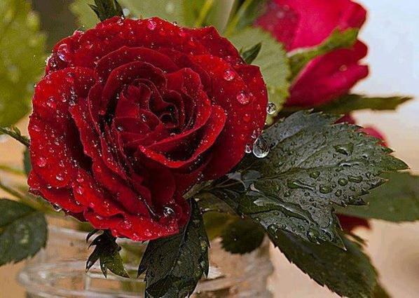 """une rose pouer vous mes amis ies"""""""
