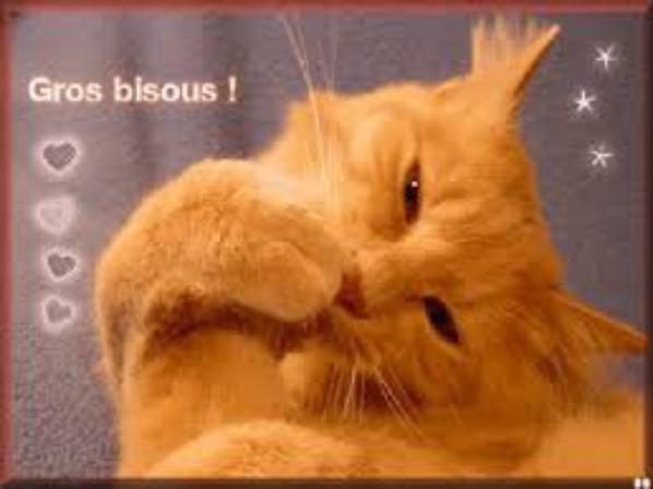 """ah ben chat alors """" les bisous"""