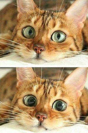ah chat alors