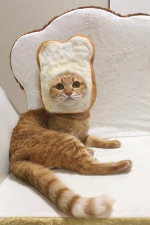 """ah  ah ben oui c'est l""""printemps  des chats alors"""