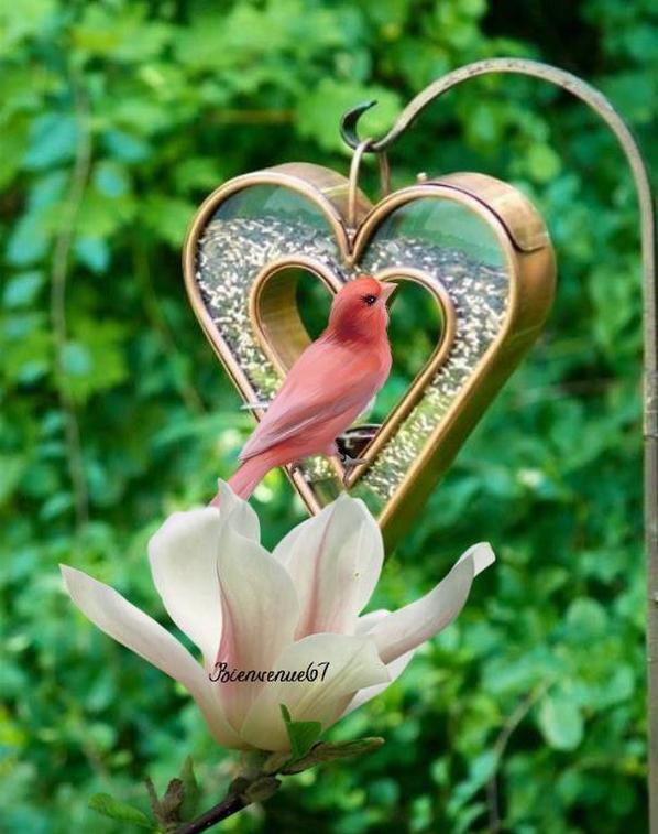l'amour dans l'amitie '