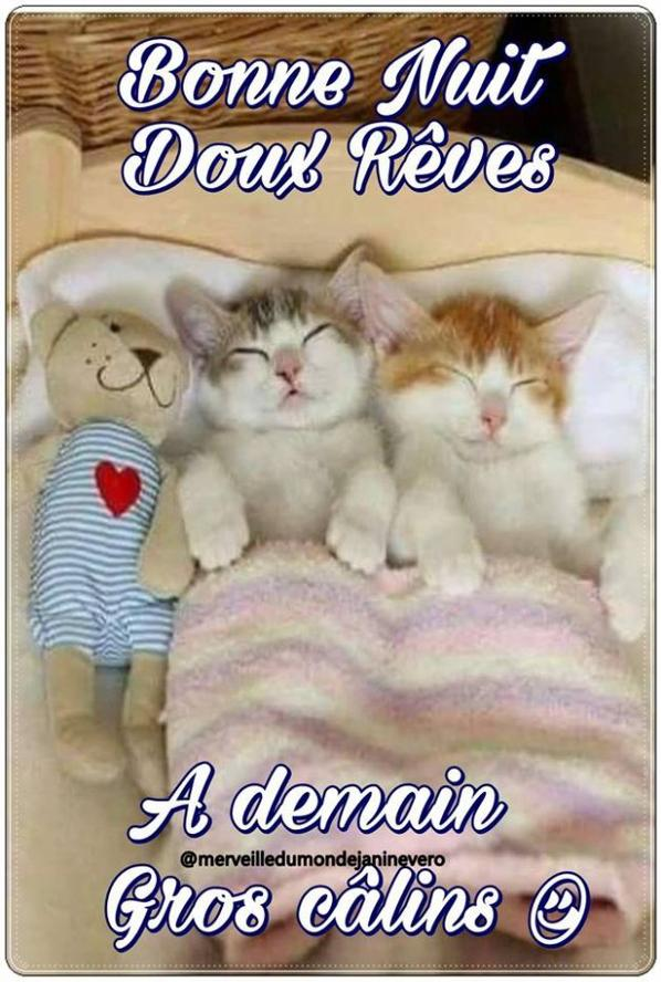 bonne nuit les chatmis