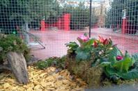 expo volières de noel aux mag vert de quimper