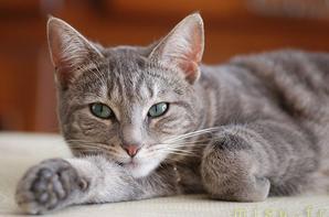 Sauver les chats