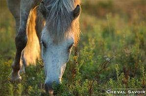 Comment bien nourrir son cheval au pré?
