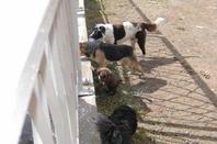 """Mise en cause """"la Fourrière municipal de Rabat pour empoisonnement de chiens"""""""