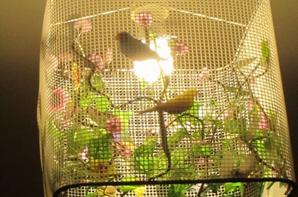 Lustre oiseaux