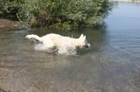 Première baignade