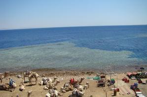 Retour en Egypte : Sharm El Sheikh en famille 2008 (suite 2)