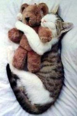 comme chien et chat