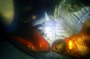 mes poisson