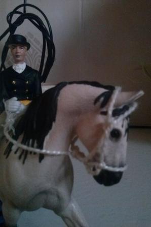 audrey et audace ( un de nos tennesse walking horse )