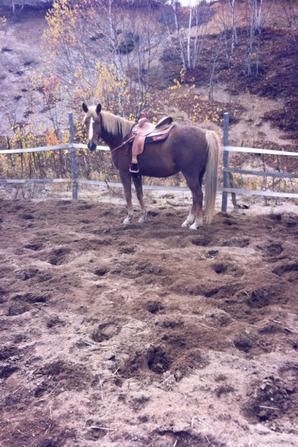 mon cheval en automne il est vraiment magnifique <3