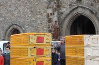 laché de pigeons a la sortie de la messe de paques a livré sur changeon(35)