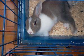voici mes deux animaux :)
