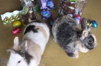 Joyeuses Pâques 2014