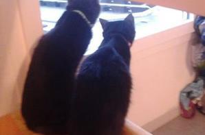 les chats de ma soeur et sont copain