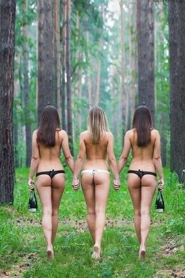 Dans le Bois...