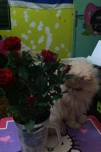 mon chat qui me mange mes feilles de rosier