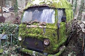 la nature qui reprend le desus !!