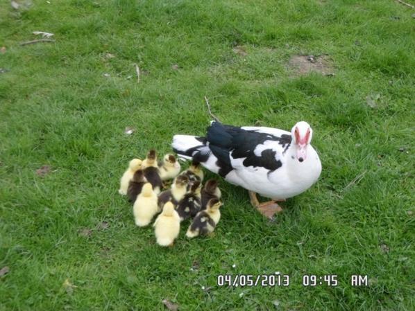 voici la petites familles qui sont nés hier