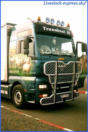 Transbest 16
