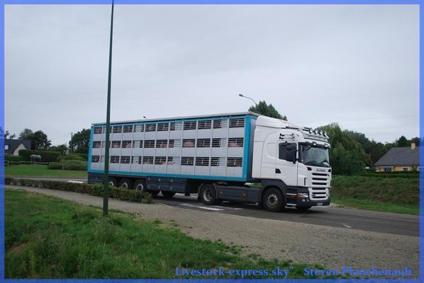 Geoffroy 16