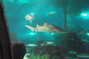 L'aquarium Baracelona