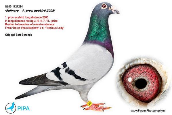 Salinero : Le Grand Pere de Ma reproductrice NL 08 Veenstra