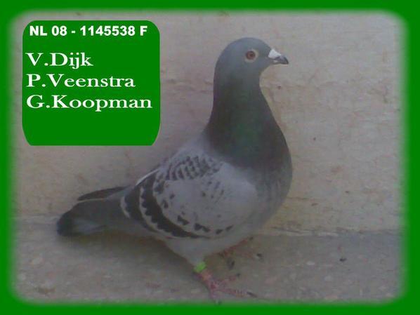 P.Veenstra x Van Dijk x Gerard Koopman .