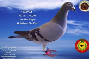 BIANCA NL 05-1717244 100% Van Der Wegen ( Domenico Barberio De Weert .