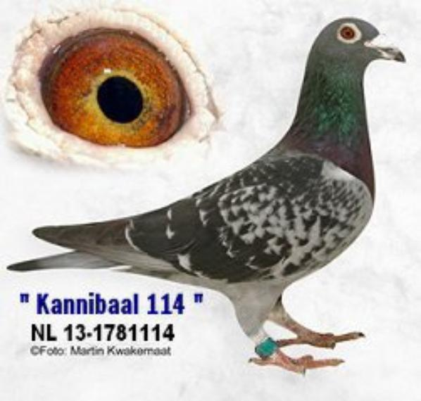"The "" KANNIBAAL - 114 """