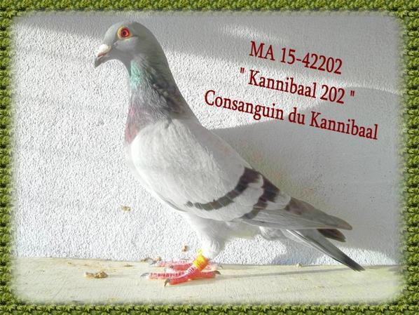 """"""" KANNIBAAL 202 """""""