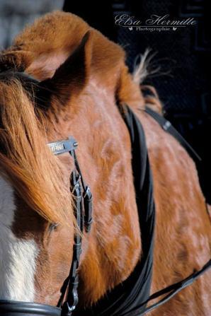 """""""Un cheval pense, ressent les choses, prend des décisions. Traitez-le comme un ami pas comme un esclave. Vous êtes entré dans sa vie, pas le contraire."""" (l)"""