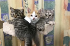 Oreo, Ohana et Oreal.